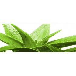 Massage à l' Aloe vera